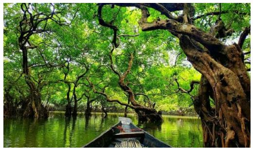 The number of tourists is increasing in Ratargul